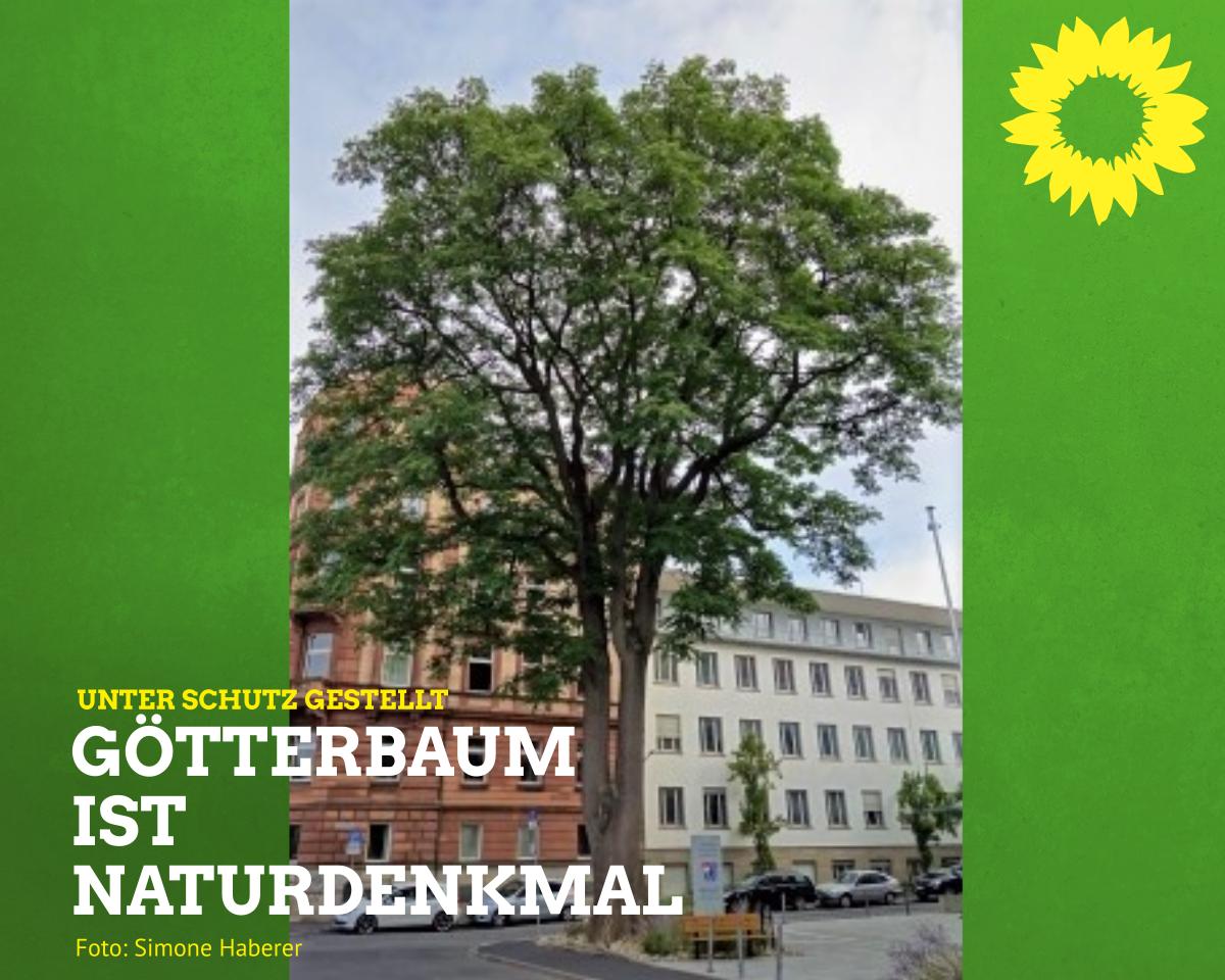 Götterbaum soll Naturdenkmal bleiben