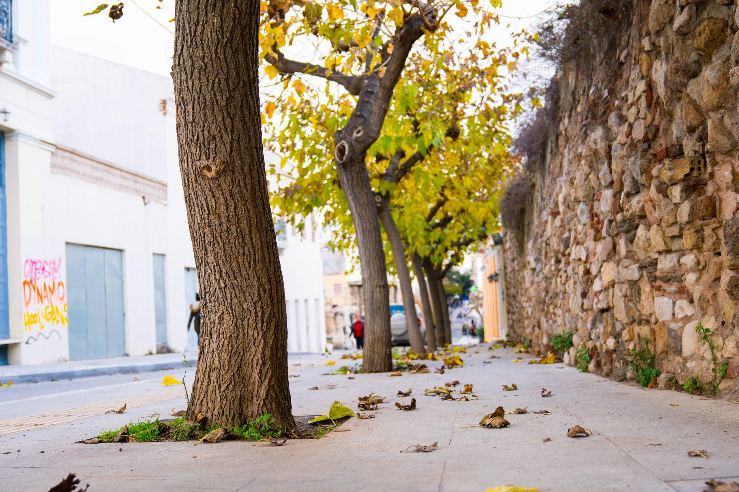 Erarbeitung einer umfassenden Baumschutzverordnung (BaumSchVO)